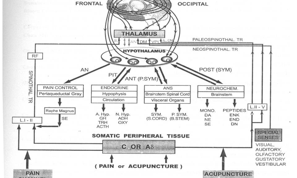 akupunktur1